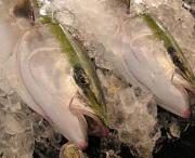 氷見ブリ漁師の独り言