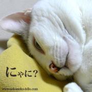 ねこねこフェリスの猫ブログ