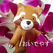 京都はんなりデザイナーのハワイウエディングアルバム