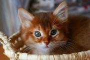 猫とaviのつぶやき