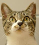 ネコは猫でも。。。 (東京 野良猫写真)
