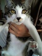 NO CAT NO LIFE!!