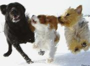 犬・いぬ・イヌ 3匹物語