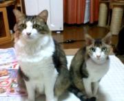 ミー&チコの毎日(病気に負けるな!!)