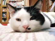 猫屋敷的日記