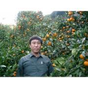 みかん農家のこだわりみかん栽培の日々