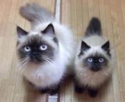 猫大好き*ヒマラにゃん日記