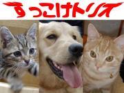 今日も今日とて犬と猫