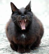 リサイクル・アンティーク黒猫堂