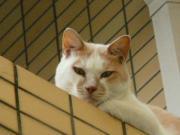 猫的日常生活