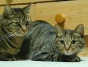 Daily life of cats ニャンタの大冒険