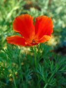 花の店 山ぼうしのブログ