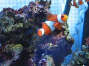 我が家の海水魚