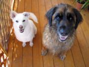 大型犬+中型犬とのありきたりな暮らし