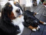 犬と暮らす 癒しとくつろぎ すみれショップ