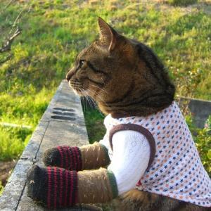 「両手のない猫」チビタと愉快な仲間たち