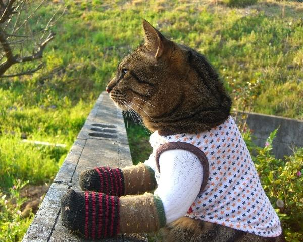 猫吉さんのプロフィール