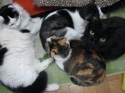 猫プレ家族