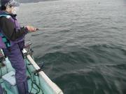 ヒラメを釣りたい!!!