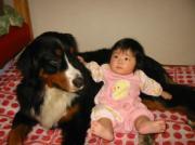 スーパーパパへ。娘と双子と超大型犬の育児日記