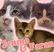 Happy Tenmo