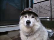 我が家の愛犬「いとしのエリー」のワンワン日記
