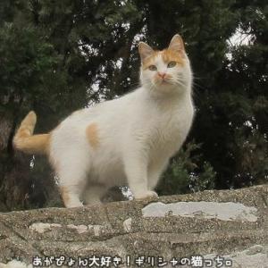 The Greek Catsギリシャの猫