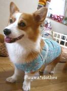 ハンドメイド*コーギーと小型犬とダックス洋服