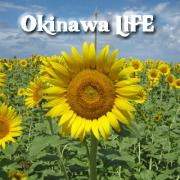 沖縄LIFE