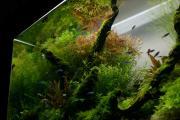 クログ水草水槽