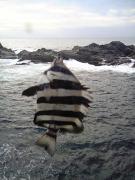 ちょっと海釣り気分!