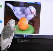 文鳥と神戸生活