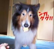 やんちゃ犬ジュリのお気楽な一日