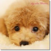 愛犬家きんちゃん。の活動日記☆岡山県☆