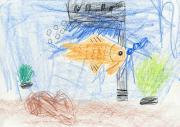 金魚の飼い方−うちの場合−