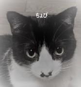 那須温泉で民宿しながら猫の里親奮闘中