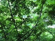 こぐまの多摩あるき武蔵野あるき