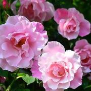 花の手帖さんのプロフィール