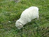 羊の国の猫たち〜ニュージーランドは楽し!