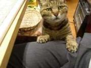 ジャパニーズホテル招き猫画像物語り
