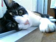 三毛猫ルアちゃんの成長日記