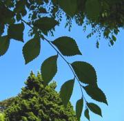 ため池の落ち葉