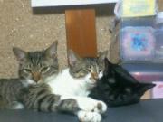 にゃん♪猫♪ニャン共生活♪