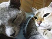ここから始まる猫生活+ワン∞