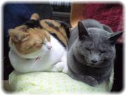癒し猫たち