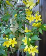 四季折々、baraケイ子の花