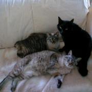 介護看護な仕事生活・猫生活