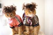 猫とプリンセス