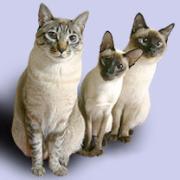 刺激的な猫たち