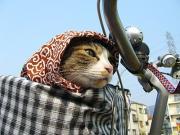 福猫屋の猫達